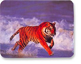 MH Designer Mouse Pad Tiger Only $1.95  at USBGear.com