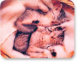 MH Designer Mouse Pad Kittens - Image A