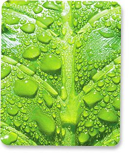 MH Designer Mouse Pad Leaf Only $1.95  at USBGear.com