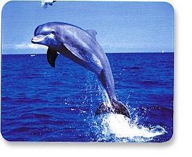 MH Designer Mouse Pad Dolphin - Image A